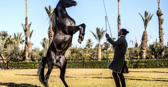 Expériences Equestres au Selman