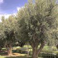 location-villa-marrakech-domaine-feng-shui-11d